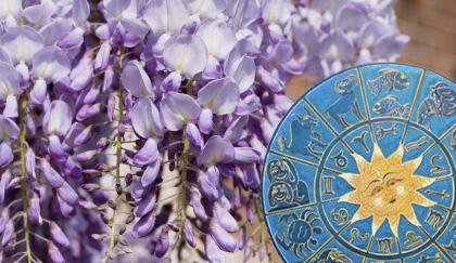 oroscopo-fiori