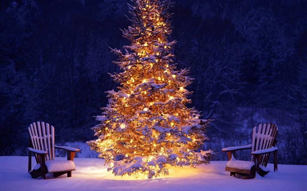 sorgenia_albero_di_natale_naturale-1024x640