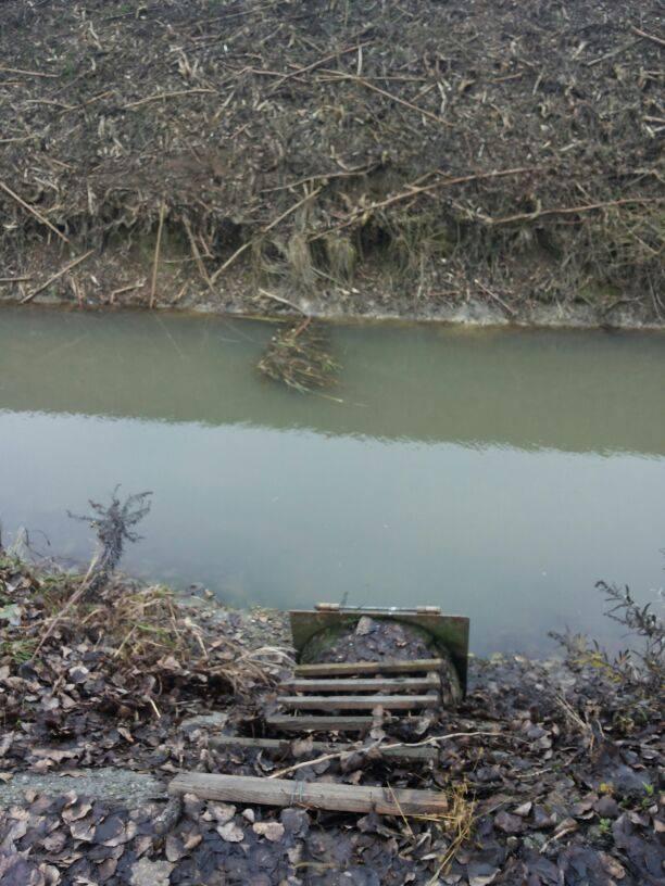 L'acqua contaminata. Foto di Marco Camera